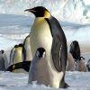 Sarkkutatás és pingvinek
