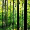 Zöldülõ Földünk